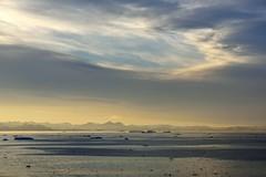 _DSC8497 (TC Yuen) Tags: glacier arctic greenland whales iceberg crusing floatingice polarregion greenlandeast