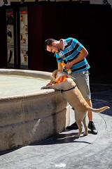 Thirsty? Valencia. Spain (marcelo_valente) Tags: street travel espaa dog man water fountain valencia puppy spain espanha europa europe labrador fuji drinking streetphotography smoking fujifilm valncia streetphotographer travelphotography comunidadvalenciana fujixe2 fujifilmxe2