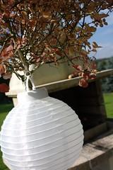 The paper lantern (dididumm) Tags: autumn light white tree fall home garden licht zuhause herbst lilac weiss garten baum autumnal paperlantern lampion flieder syringa herbstlich burgfrieden papierlaterne