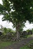 2015 04 22 Vac Phils g Legaspi - Cagsawa Ruins-12 (pierre-marius M) Tags: g vac legaspi phils cagsawa cagsawaruins 20150422