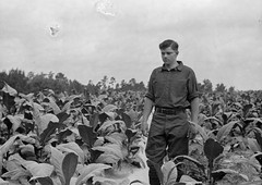 P_0005_0025.jpg (The Digital Shoebox) Tags: travel people men field landscape outside farm places roadtrip tobacco unidentified