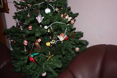 IMG_4599 (SorenDavidsen) Tags: hans mithra tirupati juletr