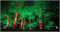 Lit Up (CliveDodd) Tags: trees lights illumination arboretum westonbirt