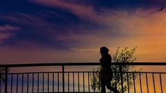 HFF-fence (Yasmine Hens) Tags: hff twilight fence happyfencefriday hensyasmine namur belgium wallonie europa aaa belgi belgia belgien  belgique blgica   belgie  belgio    bel be