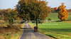 Amish Buggy on Country Road 5835 (intricate_imagery-Jack F Schultz) Tags: jackschultzphotography intricateimageryphotography amishcountry ohioamish southeasternohio fallcolor amishbuggy amishfarm