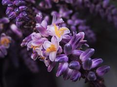um pequeno buqu (Gigica Machado) Tags: flower flor flores flowers flowerpower flora fleur floral nature natureza naturaleza natur naturale naturelovers