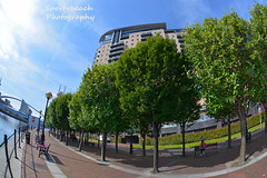 Salford Quays Waterfront (jonnywalker) Tags: salfordquays mediacityuk manchester salford quays lowryoutletmall waterfront trees apartments imperialwarmuseumnorth iwmn millenniumfootbridge footbridge greatermanchester manchestershipcanal fisheye
