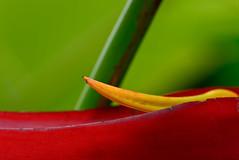 La Réunion (ingridkreuz) Tags: réunion indischerozean indianocean insel frankreich france outremer botanischergarten natur nature plants üppig tropisch tropical flower blume shape form