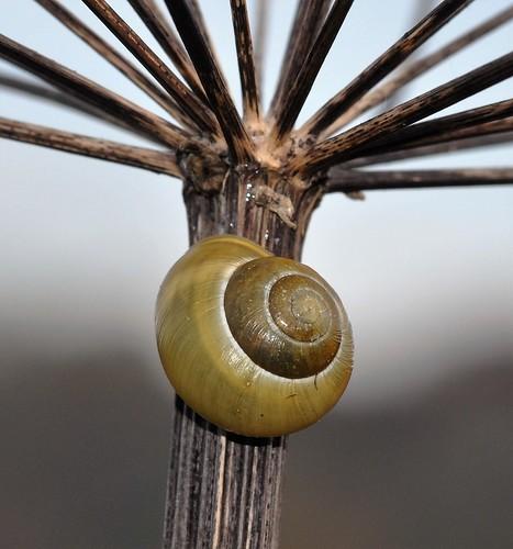 Snail 2. HSS!