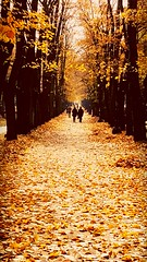 Golden (anja ivastanin) Tags: fall autumn yellow park leaves walk trees