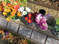 Monday, 7th, Filled with flowers IMG_9338 (tomylees) Tags: monday 7th november 2016 upminster essex