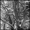 img105.jpg (jezqio) Tags: square mediumformatfilm tree mediumformat hasselblad500cm hasselblad abstract uppsala trees snow