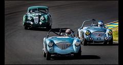 Austin Healey 100 BN1 (1954) & 100M (1954) & Jaguar XK 140 FHC (1955) (Laurent DUCHENE) Tags: peterauto lemansclassic 2016 bugatti jaguar xk 140 fhc austin healey 100 bn1 100m m