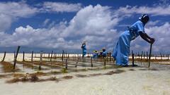 Seaweed Farming (sagimihaly) Tags: africa tanzania zanzibar summer vacation pajebeach paje indianocean ocean sand whitesand endlessblue beach blue