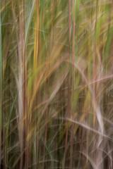 Gras-2 (Hiheinz) Tags: grser effekt bewegung dynamik regionen natur effect movement