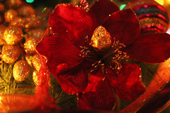 red flower (Katrinitsa) Tags: christmas2016 christmas colors greetings holidays happy happiness red green tree christmasdecoration christmaslights christmastree lights shadows shadow light decoration interior indoors design balls gold bokeh flower golden snowman white shine shinning sparklinglights sparkling canon canoneosrebelt3i ef35mmf14lusm house ornaments