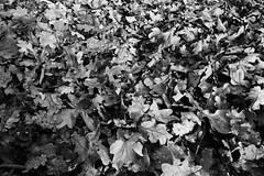 Litter (Mr Richie) Tags: panasonic lumix lx5 digital dadsgroup fathers nature streatham common lodge monochrome blackandwhite bw filmgrain