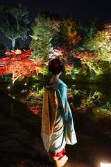 Maiko20161119_06_04 (kyoto flower) Tags: kodaiji temple fukuno kyoto maiko 20161119      noblesseoblige