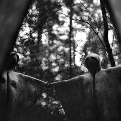 The Ritual (DanRSmith) Tags: bw blackandwhite sculpture woods surrey rolleiflex xenotar 35e kodaktrix pushed iso1600 rodinal