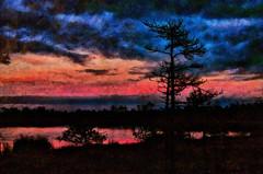 Sunset in Bog (Kalev Vask.) Tags: digital kalevvask postprocessed dap photoshop photomanipulation digiart photoart painterly artistic creative summer sunset bog estonia