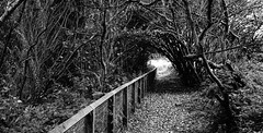 Forest Vortex (JamieHaugh) Tags: formby liverpool outdoor outdoors blackandwhite blackwhite monochrome woods trees forest england