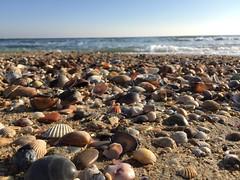 (karine_avec_1_k) Tags: dimanche sunday coquillages sea mer sète