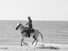 A galope sobre el mar! (eduardo.osorno) Tags: horse beach mxico caballos mar sand playa arena yucatn galope