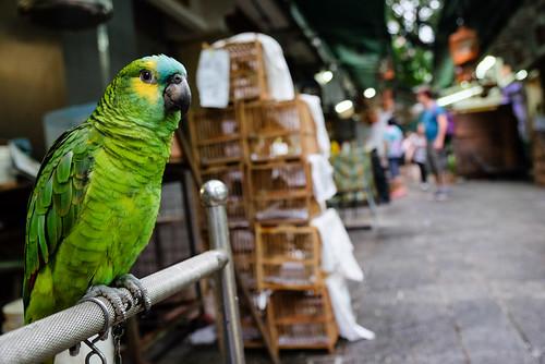 Thumbnail from Yuen Po Street Bird Garden