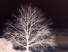 130122 acpN 150907  Ththi ( 8 pics ) (thethi: pls read the 1st comment) Tags: creative arbre photoshopped citadelle namur wallonie belgique belgium bestof2013 setmorethan15forexplore20122013 setnamurcity setvegetaux albumjanvier setvosfavorites faves57 ruby10