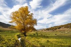 Paisajes de otoo (Inmacor) Tags: autumn espaa tree landscape arbol paisaje colores campo fields otoo cuenca ltytr2 ltytr1 inmacor