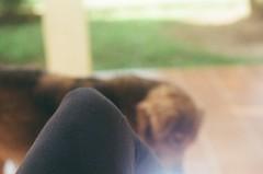 (Juliana M. M. Soares) Tags: dog 35mm pentax cachorro