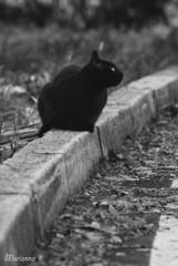 looking for (Marianna ) Tags: blackandwhite pet cats pets cat gatto gatti animali animale biancoenero