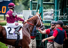Sheer Drama meets the Gate Crew (EASY GOER) Tags: horses horse ny newyork sports race canon athletics track saratoga competition upstate running racing 5d athletes races spa thoroughbred equine thoroughbreds markiii