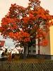 am Haus (Django_ Reinhardt Walter) Tags: autumn tree herbst wiese zaun blätter garten bunt jägerzaun autuno