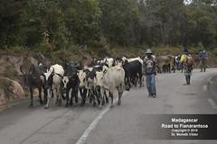 _D8C2888 Utazás Fianarantsoa felé (Németh Viktor) Tags: viktor madagascar fianarantsoa roadto németh világutazó drnvq