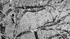Rodejat (lluiscn) Tags: bw portugal sintra bn castelo árbol niño arbre blanc castillo negre nen castell picat escena ramas branques zenital picado xiquet