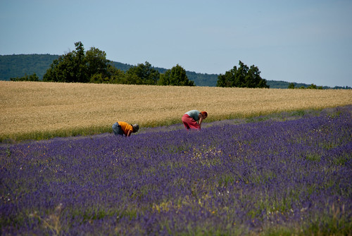 Provence_09_375
