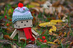 Even little cardboard robots need to wrap up warm for autumn... (Vicktrr) Tags: autumn red cold cute green hat leaves yellow scarf robot big warm berries sweet innocent adorable knit confused chilly wooly smoothie autumnal bobble danbo danboard
