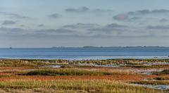Vogelschutzgebiet, Wangerooge (neueliebeyokohama) Tags: nordsee wangerooge vogelschutzgebiet zugvgel nikond90 ruhezone