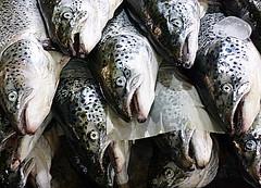 Fresh (Raul Jaso) Tags: food fish pez animal animals lumix mexicocity peces comida clam shellfish seafood animales pescado fishes clams cibo animale ciudaddemexico pesce pescados almeja fruttidimare almejas crostacei molusco panasoniclumix mercadodesanjuan crustaceo crustaceos moluscos molluschi crostaceo mollusco comidadelmar productosdelmar dmcfh8 panasonicdmcfh8 rauljaso rauljasofotografia rauljasophotography