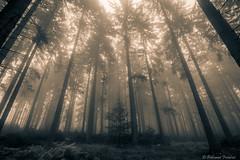 IMG_8680-4 (polinard fred) Tags: monochrome fog couleurs jour arbres l 5d paysage extérieur brouillard f4 1740 forêt brume markii bichrome
