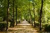 Autumn Tree Path