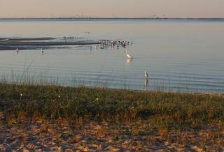Ocean Springs: beach & seabirds, early morning