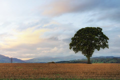 Sugarloaf at Dusk (Martyn.Smith.) Tags: sunset mountain tree field southwales canon landscape eos landscapes photo flickr image dusk meadow software sugarloaf lonetree sigmalens nikcolorefex niksoftware 700d goyre