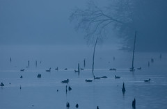 Cold Morning (snooker2009) Tags: morning lake nature water birds fog geese pennsylvania wildlife foggy