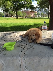 honey-and-cjs-little-boy-brody-relaxing-at-his-new-home-in-florida_18850914356_o