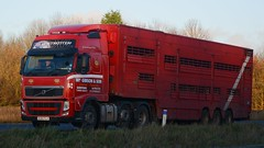 KU60 FLH (panmanstan) Tags: truck wagon volvo motorway yorkshire transport lorry commercial newport vehicle livestock fh m62 haulage hgv