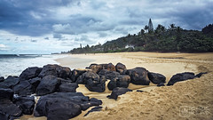 Rock piles # (Grind_da_coping) Tags: beach hawaii surfing northshore pipeline offthewall rockpiles
