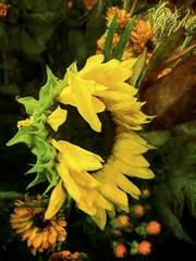 mixed arrangement (Pejasar) Tags: flowers sunflower paint art arrangement yellow impressionistic