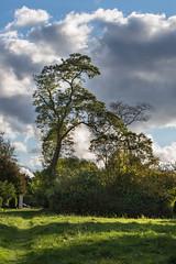 Robinie im Schlossgarten Jersbek (Strandgutsuche) Tags: jersbek barockgarten stormarn holstein deutschland